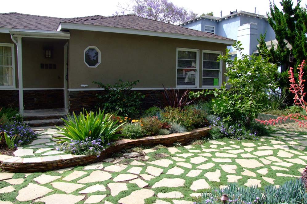 Puzzle pieced pavers for Drought resistant grass crossword clue