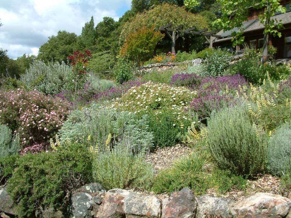 Nadine S Garden