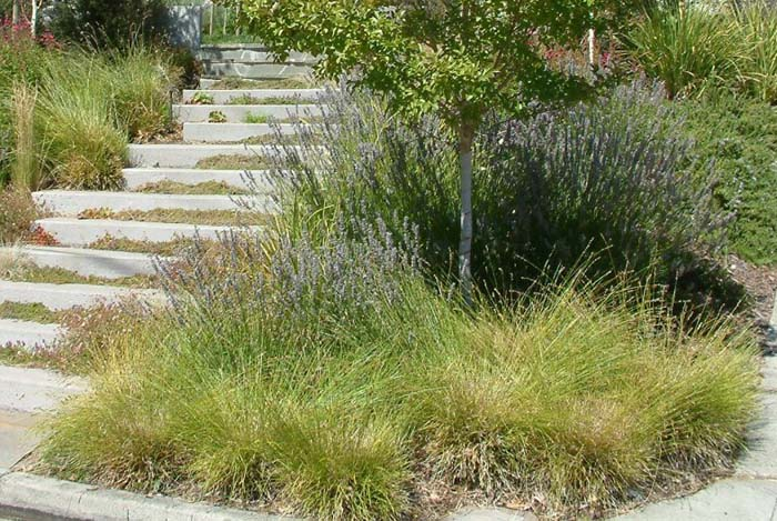Plant photo of: Carex divulsa