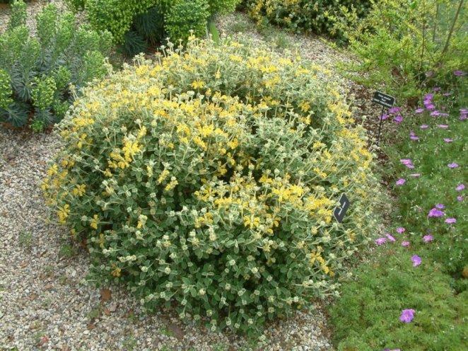 Low maintenance shrubs for Purple low maintenance plants