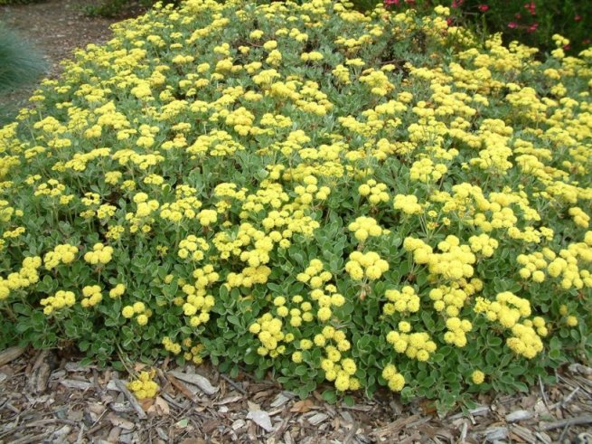 Low maintenance shrubs for Low maintenance plants and shrubs