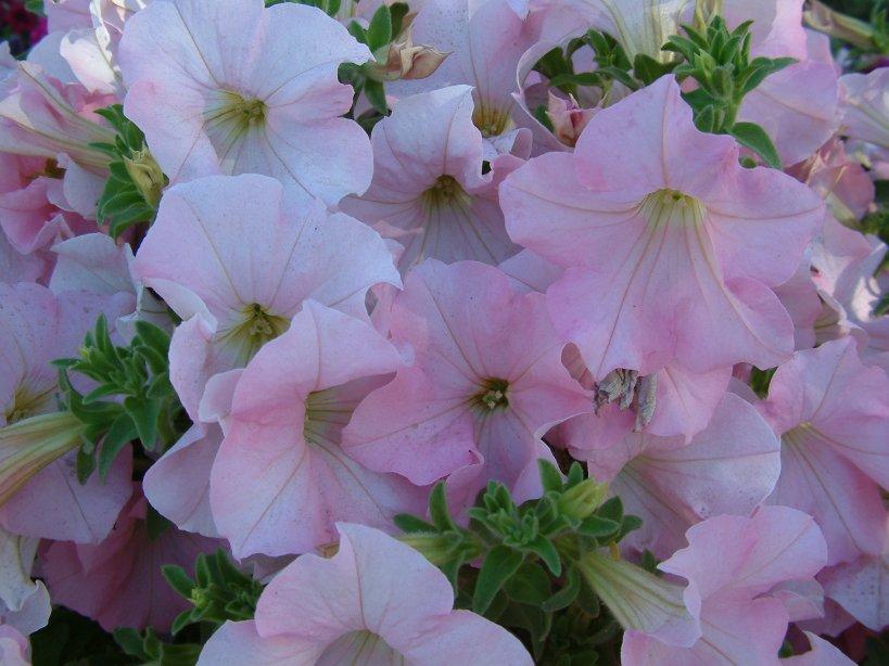 list of common garden flowers | homify garden design